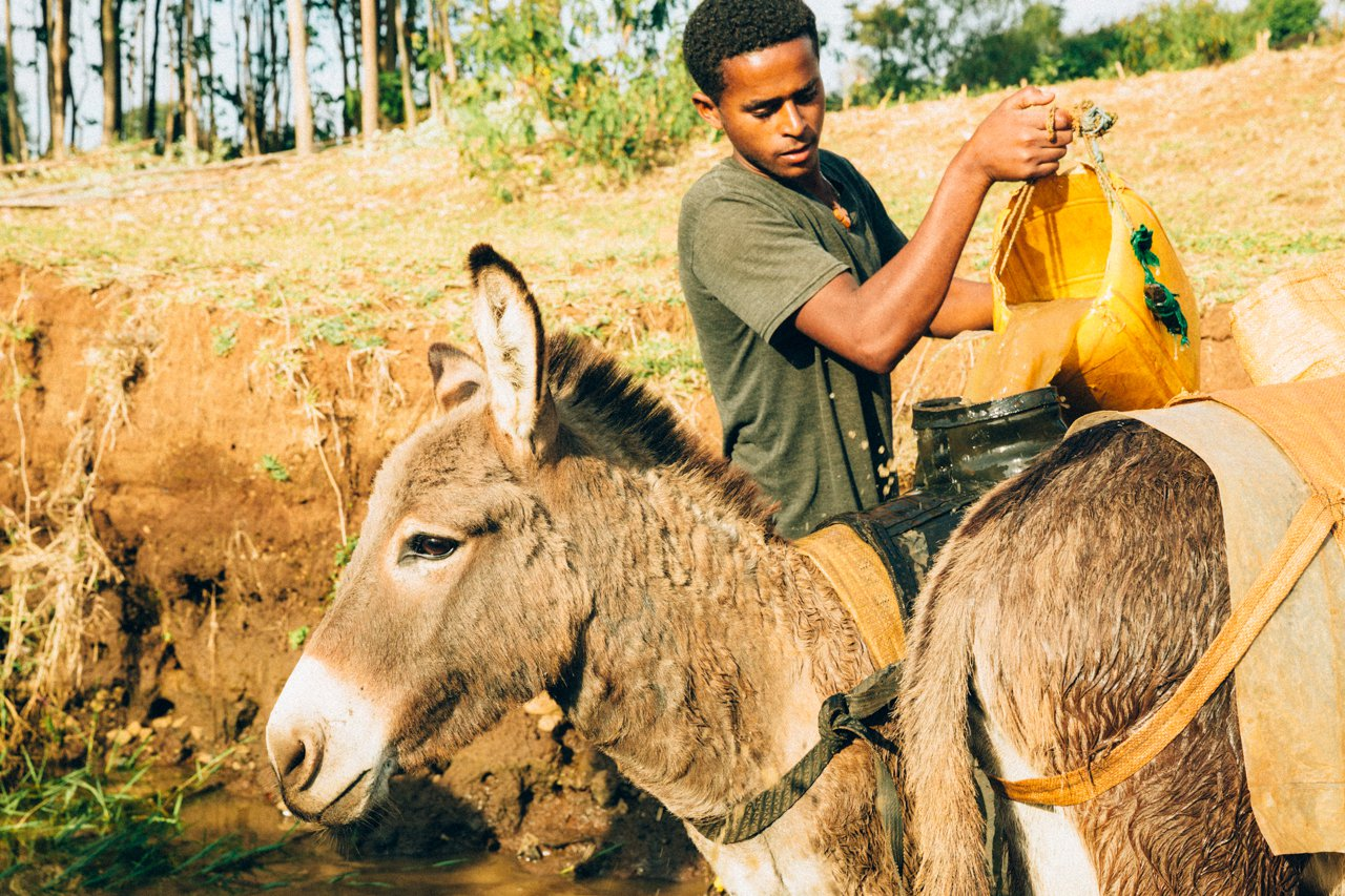 Ethiopia donkey and water