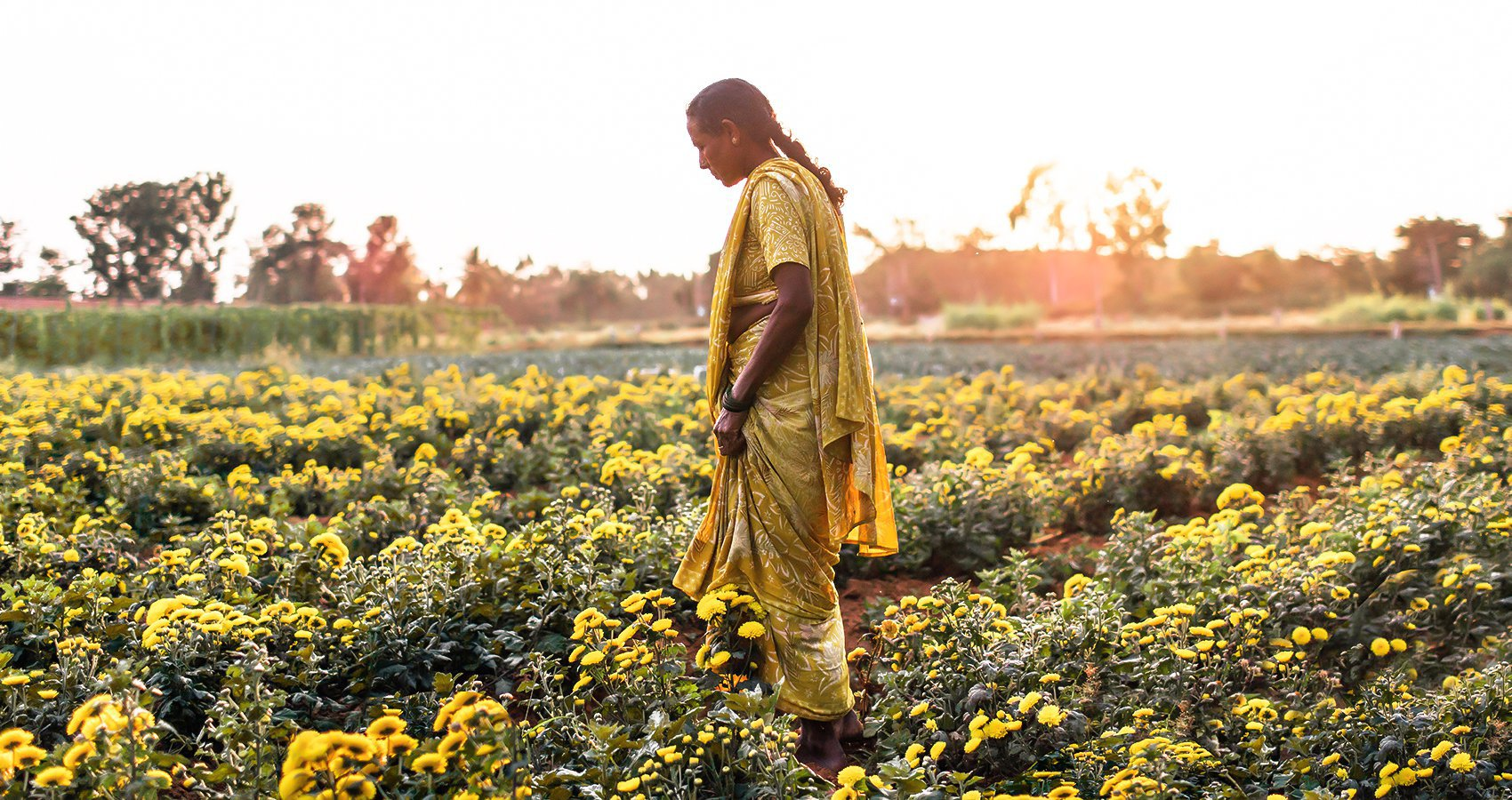 A woman stands in a field of flowers near Bangalore, India